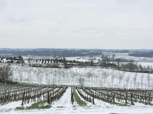 Vignoble Armagnac Gascogne - Chai du Chateau