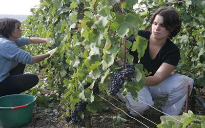 Champagne Viard Lanier_vignes < Azy-sur-Marne < Aisne < Picardie