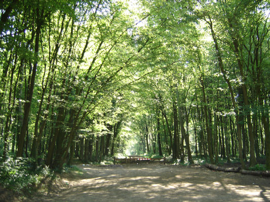 FORÊT D'ANDIGNY