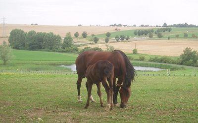 Ferme de Montfresnoy cheval < Charmes < Aisne < Picardie