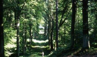 Forêt de Retz _randonneuse < Aisne < Picardie