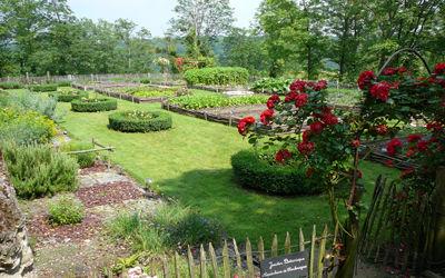 Jardin médiéval_roses < Coucy-le-Château < Aisne < Picardie