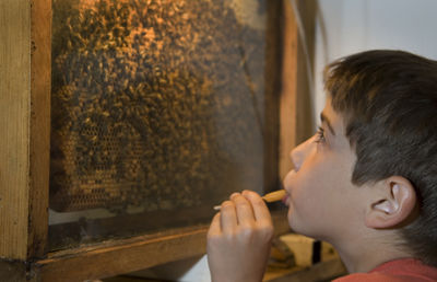 Les ateliers de l'abeille_garçon_devant_abeilles < Chavignon < Aisne < Picardie