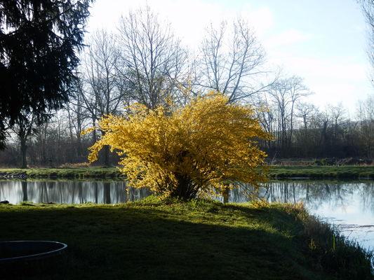 Les étangs du Moulin de Rollequin 2