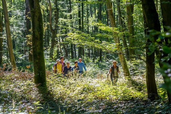 Randonnée en forêt de Retz < Aisne