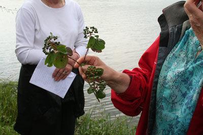 Sortie nature plantes < Laon < Aisne < Picardie