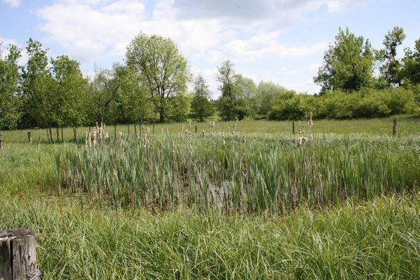 Prairie sous le bochet < Grandrieux <Aisne < Picardie