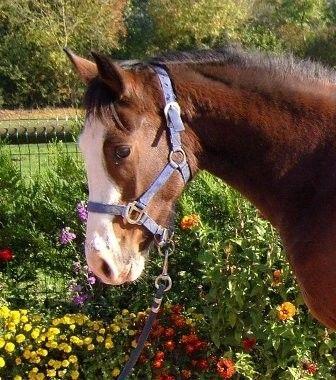 Centre equestre < Ponyvalor < Hirson < Aisne < Picardie