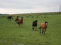 craonnelle_centre_equestre_chemin_des_dames_chevaux_au_galop
