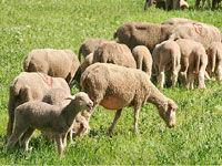deg_moutons_generique