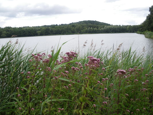 étang avec fleurs 2