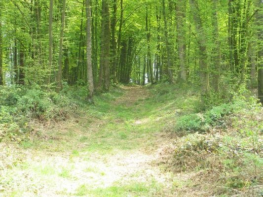 chemin < forêt < Aisne < Picardie