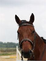 saponay_centre_equestre_cheval