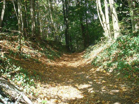 La vallée de l'Omignon