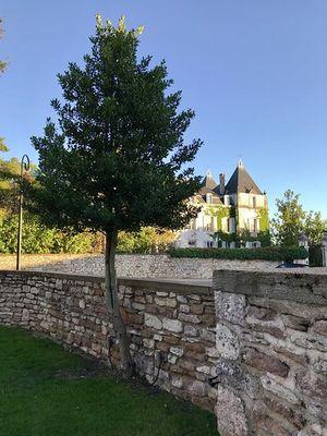 Guest-house-in-Bourgogne-Les-Maisons-de-Chamirey-Le jardin