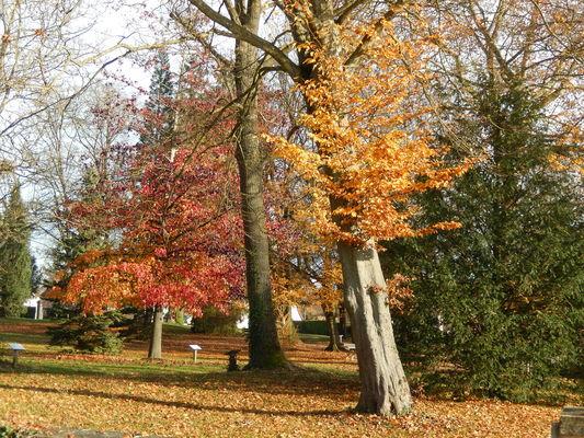 Fragnes La Loyere - Parc des Lauriers - 2016 (1)