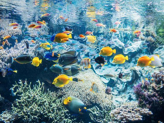 Aquarium-pavillon-tropical-1---Copyright-Benjamin-Deroche
