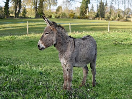 Balades à dos d'ânes - Josselin - Ferme de l'Herbe Tendre - Morbihan - Bretagne