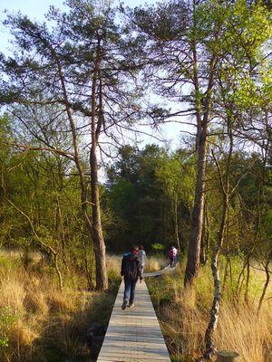 Balade nature en Brocéliande_Paimpont