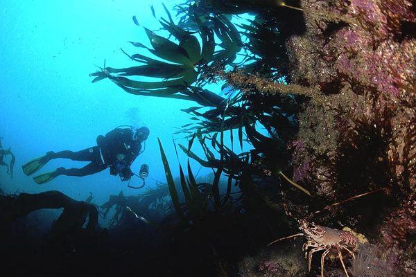 Ecole de plongée de Plougasnou