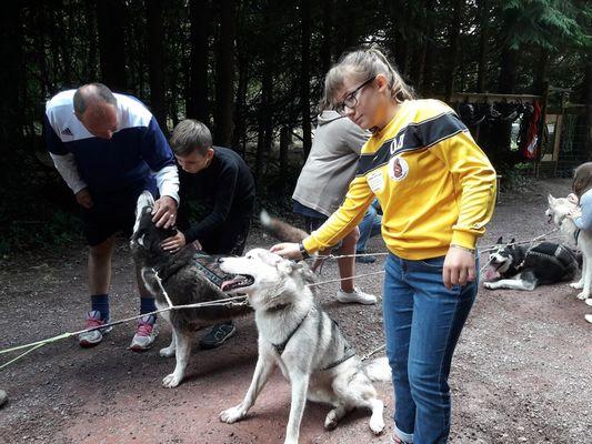 Ferme Nordique_Paimpont_chiens