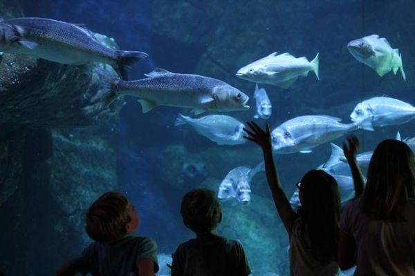 L'Aquashow