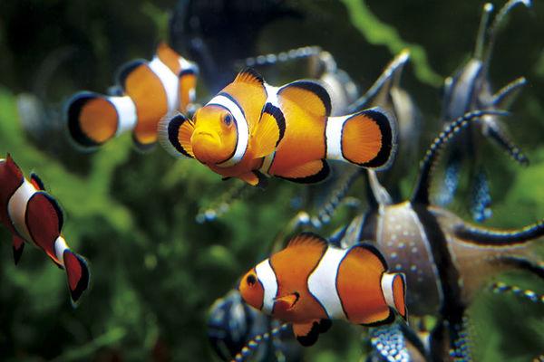 Le Grand Aquarium de Saint-Malo
