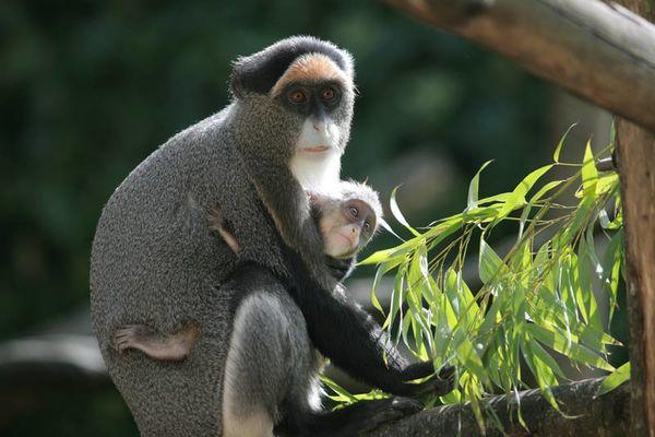 Parc Zoologique de Champrépus