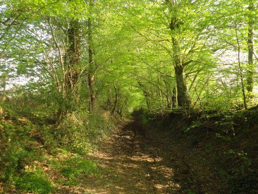 chemin de randonnee proche du gîte du Bas Coudray à Bédée