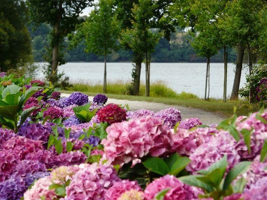 Circuit des hortensias - lac au Duc - balade - Ploërmel - Morbihan - Bretagne