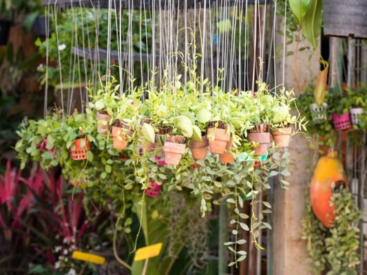 plantesgrainesplantation-6