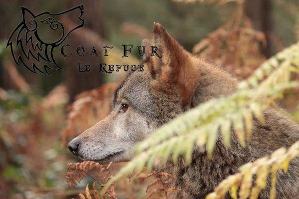 refuge des loups  s 1