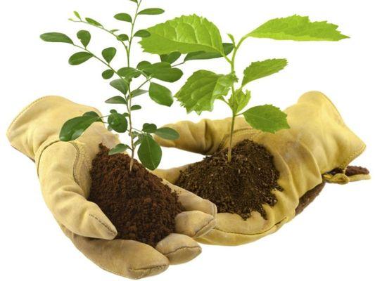 troc-plantes-4
