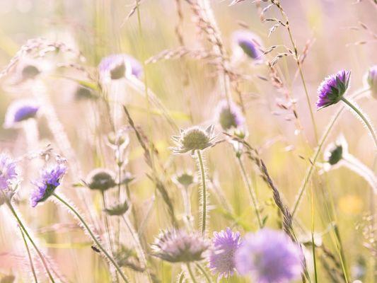 wildflowers-1406846-1920