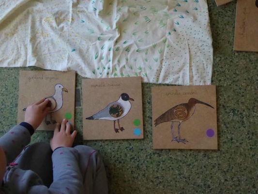 Histoire-Oiseaux