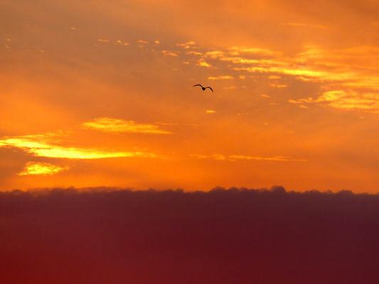 reserve ornithologique 1024 px