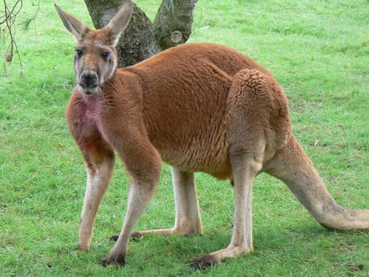 LE PARC AUSTRALIEN
