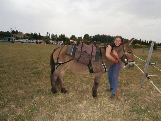 des caleches et des chevaux