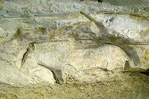 Marquay - Abri de Cap Blanc : Frise des chevaux, détail