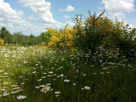 PCU-Jardins-de-Haute-Terre--9-