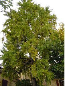 Photo arbre