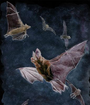 nuit-chauves-souris