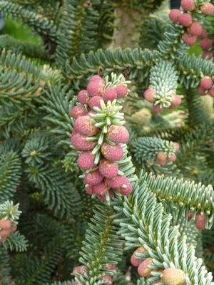 arboretum-2