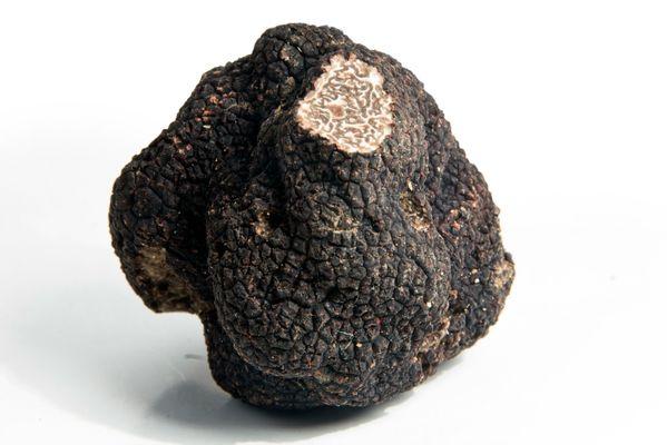 Truffière de Vielcroze