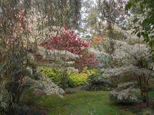 jardin-cistus-11