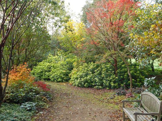 jardin-cistus-9