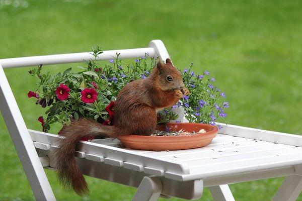 repas-de-printemps-sagelat