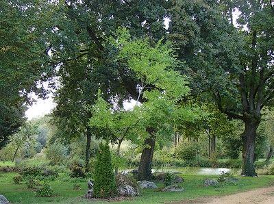 Arboretum3-sit.jpg_3