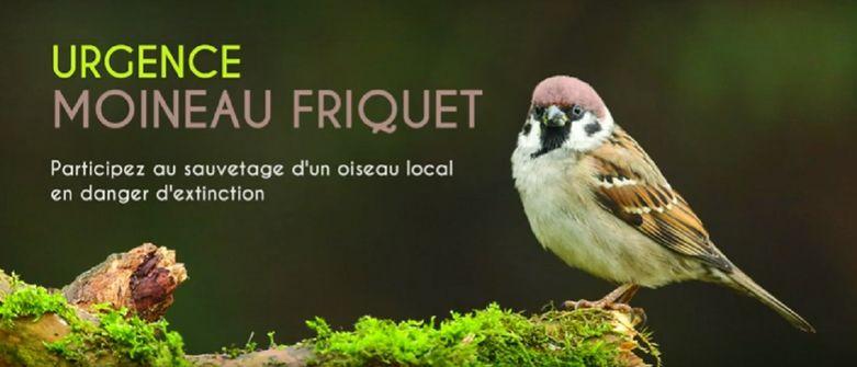 200704-urgence-moineau-friquet-claudie-stenger