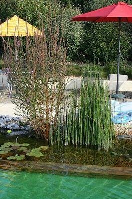 piscine naturelle-sit.jpg_10